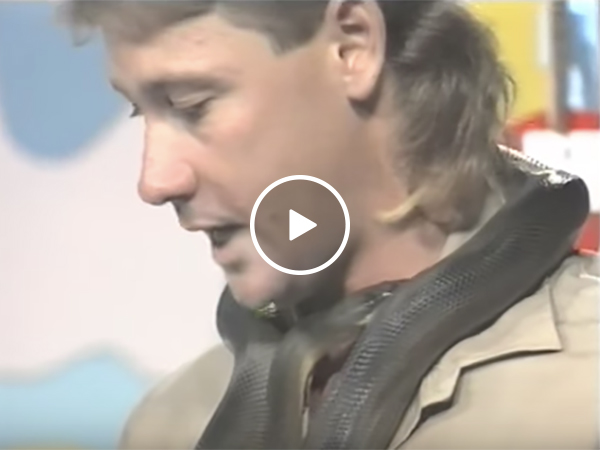 Snake bites Steve Irwin on live television