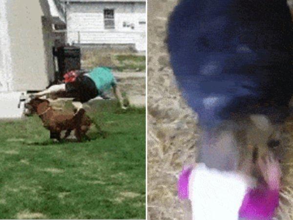 Animals attacking Kids (15 GIFs)