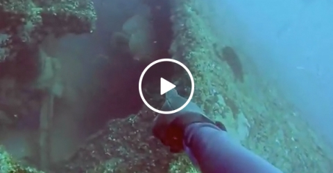 Trolling fish sends scuba diver into a blind rage (Video)