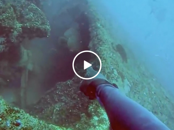Trolling fish sends scuba diver into a blind rage (Video)