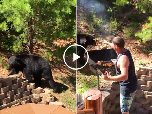 Dad risks life protecting BBQ from bear, is dad of all dads (Video)