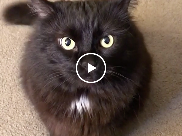 Black cat refuses to take no for an answer, attacks (Video)