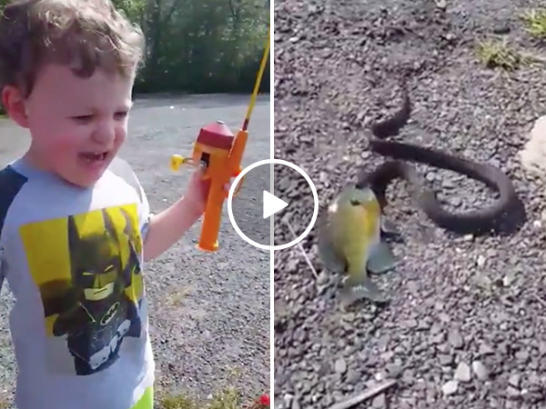 Greedy snake steals little boys first fish (Video)