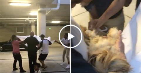 People save puppy from building