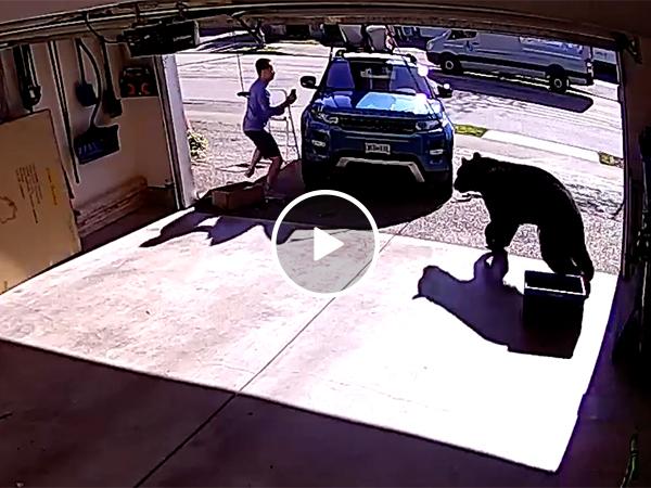 Bear attacks man in his garage