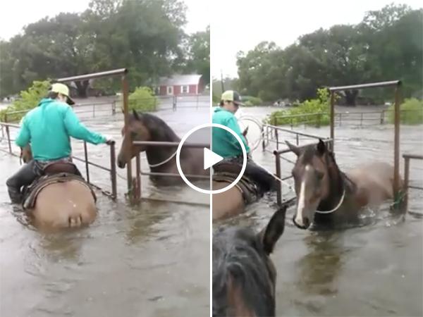 Man saves a horse during Hurricane Harvey