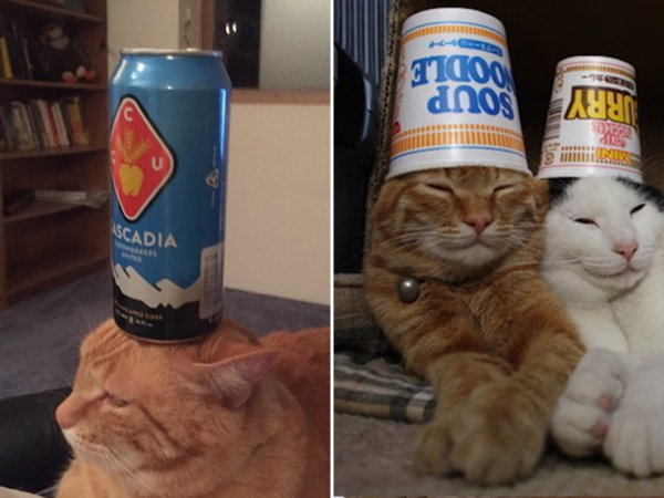 Stuff on Cats is fun for all the family (25 Photos)