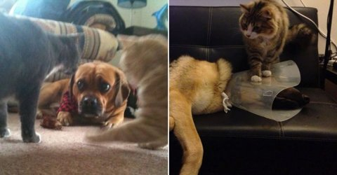 Cats and dogs living together is organised chaos (30 Photos)