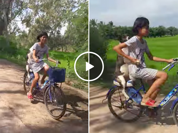 Biking Dog | K9 Passenger | Puppy Riding Bicycle