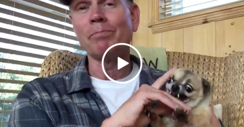 Animaniacs actor shows health benefits of petting vicious dog (Video)