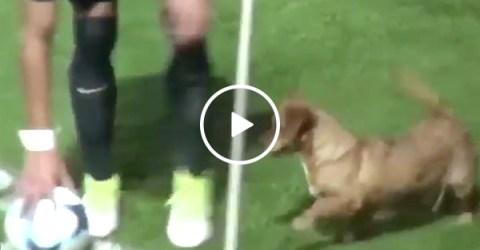 Dog Interrupts Soccer Match   Puppy Runs Through Futbol Game