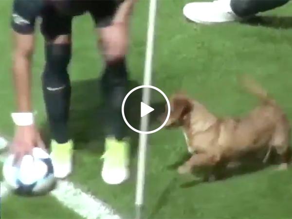 Dog Interrupts Soccer Match | Puppy Runs Through Futbol Game