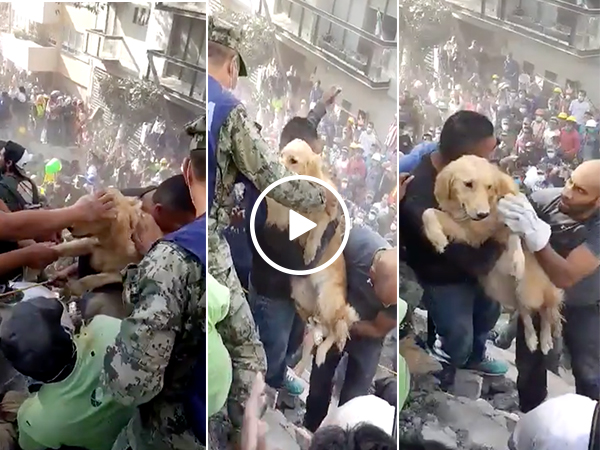A dog is rescued from the rubble after the Mexico earthquake