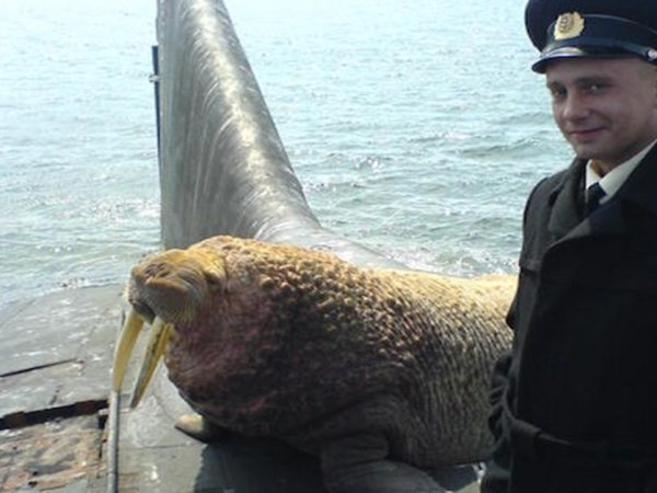 Meanwhile, in Russia.. (25 Photos)