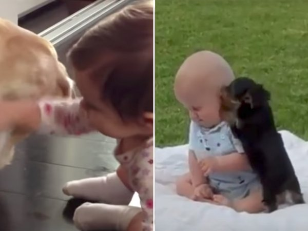 Babies meeting dogs is adorable overdrive