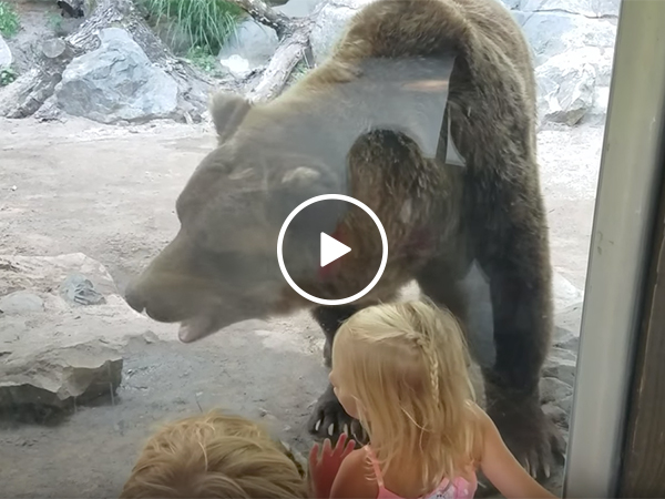 Bear takes a poop in front of kids
