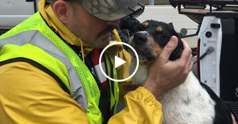 Abandoned dog rescued after treading water for 3 days (Video)