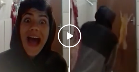 Useless cat freaks out with owner trying to catch a rat (Video)