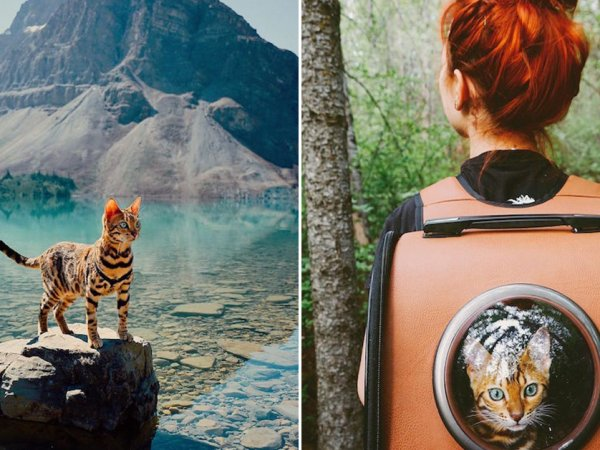 Suki the Bengal cat is always up for adventure