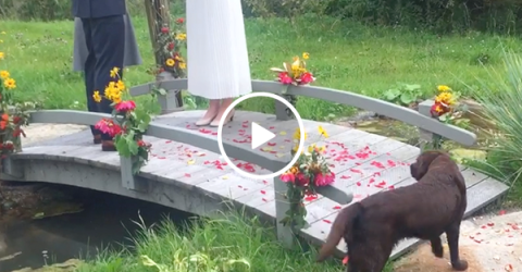 Hilarious stray dog steals the show at wedding (Video)