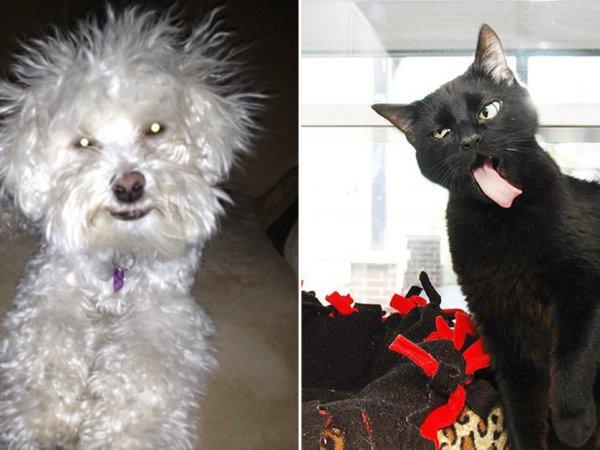 Animals that weren't at their photogenic best