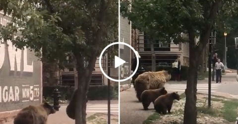 Bears Pop Out Of Tree and Scare People Walking on Street