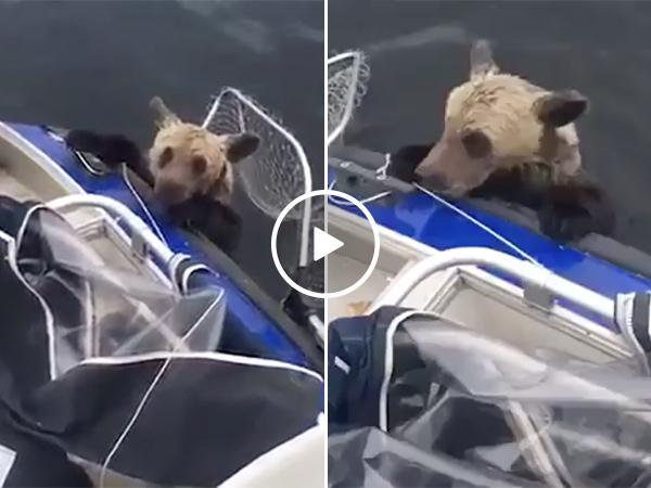 Fishermen Rescue Bear Cubs | Drowning Bears Get Saved