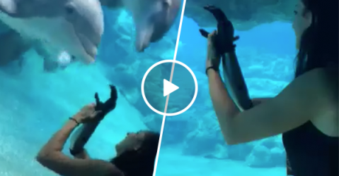 Curious dolphins stop to watch girl's bionic arm (Video)