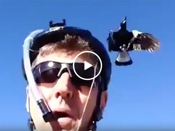 Guy Makes Helmet That Scares Away Crows