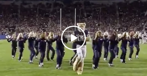 BYU Mascot Dances With Cheerleaders | Cougar Nails Halftime Routine
