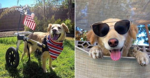 Meet Scooty the dog, 'The Happiest Dog in the World'