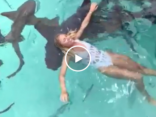 Girl tosses chum in shark-filled water, jumps in (Video)