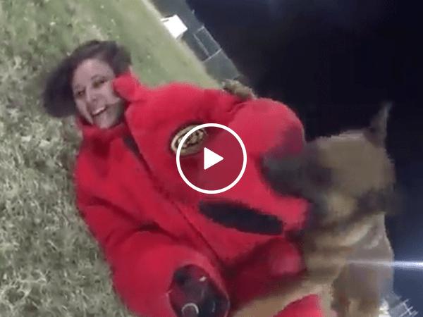 Military K9s pack a nasty bite, taking down female volunteer (Video)