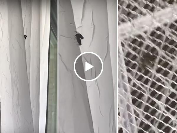 Flies having sex get killed by zapper