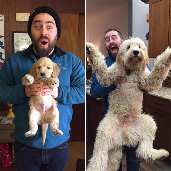 1 x41qqzj Puppyhood to doghood is one adorable journey (41 Photos)