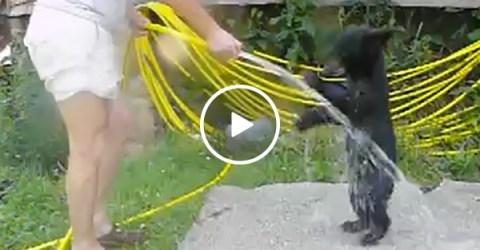Cub Takes A Bath | Cute Bear Plays Outside