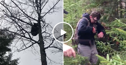 Bear Climbs Tree and Poops on Hiker Below Him