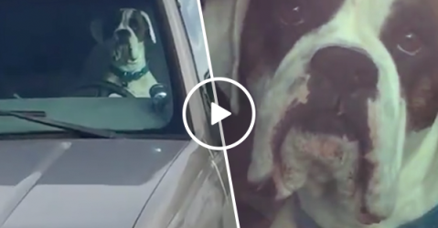 This might be the most impatient dog ever (Video)