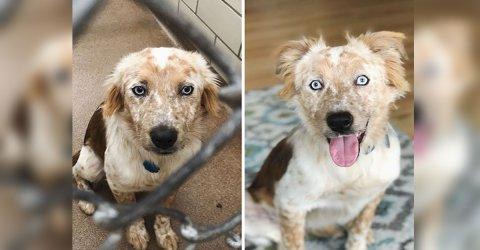 Woman adopts dog for 25th birthday (9 Photos)