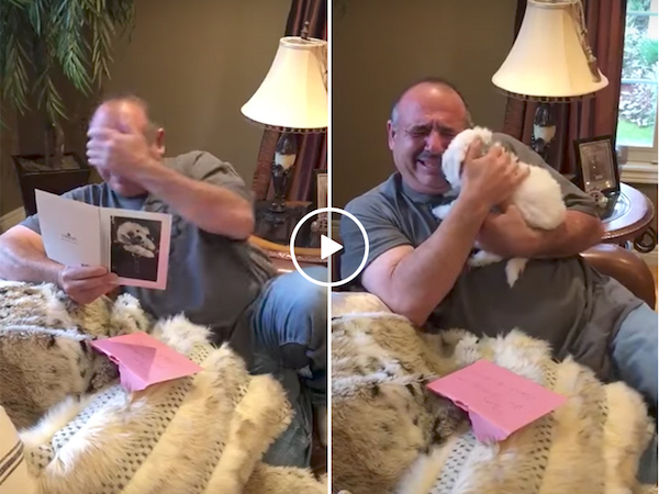 Man mourning dead dogs gets the awesome gift of a new friend