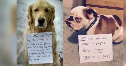 Funny Dog Shaming Signs
