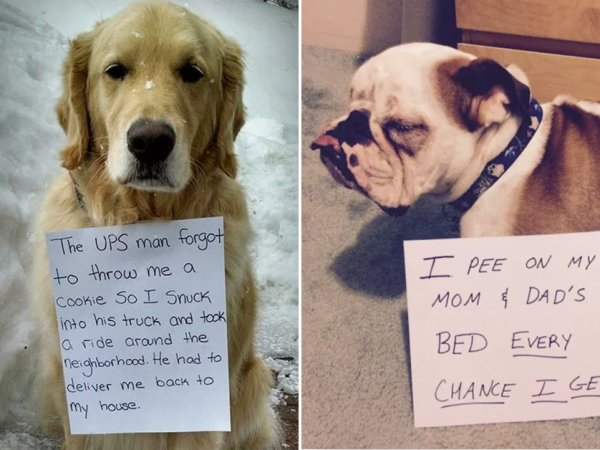 Funny Dog Shaming Signs