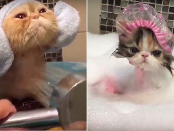 Cute animals taking baths