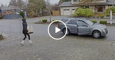 Nanny Runs Down a Robber and Catches the Thief
