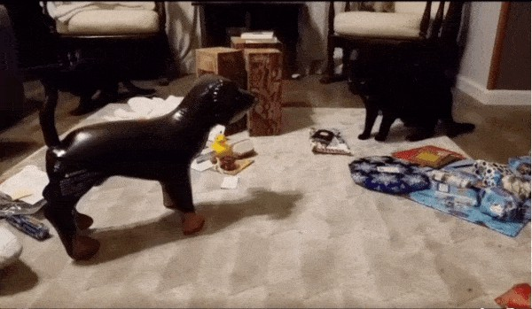 these startled cats are being a little overdramatic dont cha think x gifs 23 Startled cats are the definition of overdramatic (14 GIFs)