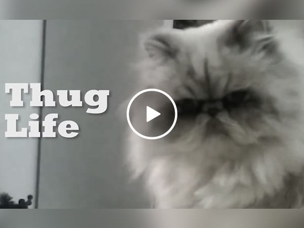 This 'Unexpected Thug Life' is all you need to see today (Video)