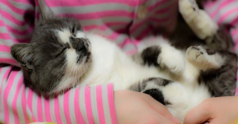 A veterinary clinic in Ireland is hiring a cat cuddler (4 Photos)