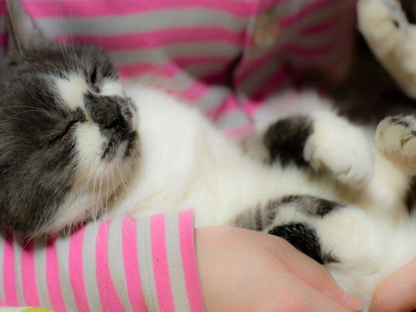 A veterinary clinic in Ireland is hiring a cat cuddler (4 Photos)