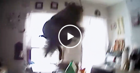 Squirrel attacks police officer in woman's home (Video)