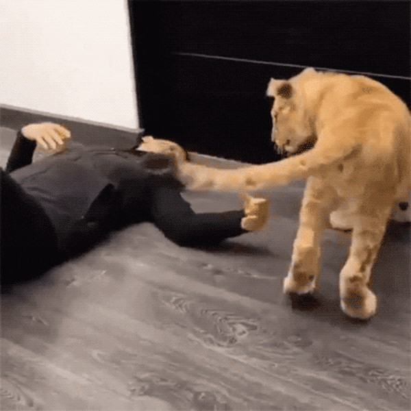these animals are ferocious snuggle monsters 16 gifs 1513 These animals are FEROCIOUS... cuddlers! (16 GIFs)